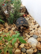 Frank the Tortoise