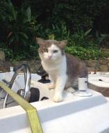 Hobo on the boat