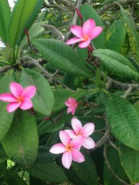 st thomas flowers 001