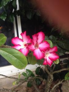 st thomas flowers 005