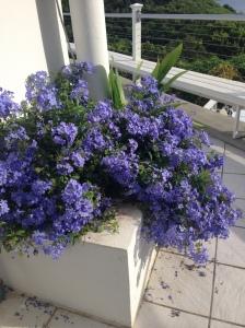 st thomas flowers 008