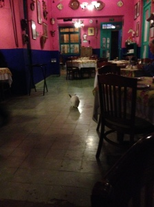 Is that a rabbit in the restaurant?