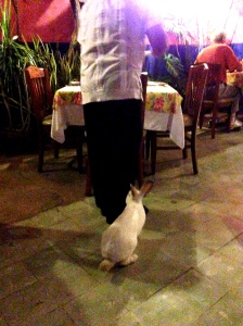 He likes to follow the waiter.