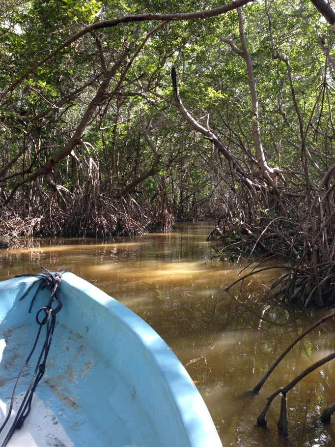 Boating through the mangroves